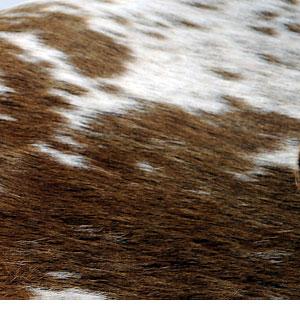 Brown + White (Cowhide)